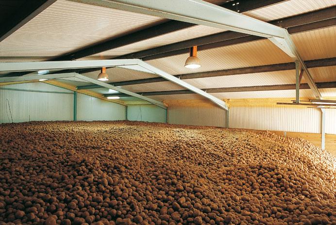 Silo Patata Industria